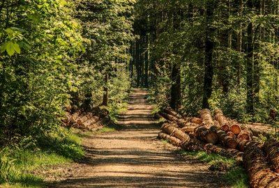 promenade en forêt autour d'Achouffe